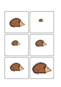 hedgehog size sequencing