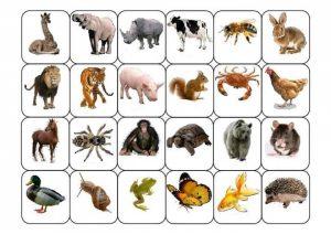 preschool animal theme games (2)