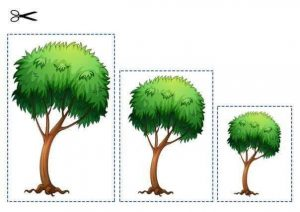 tree size sequencing