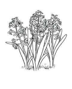 flowers-coloring-page-for-kids-12