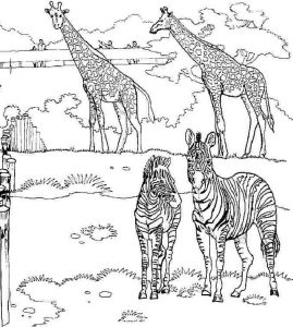 giraffe-and-zebra-coloring-page