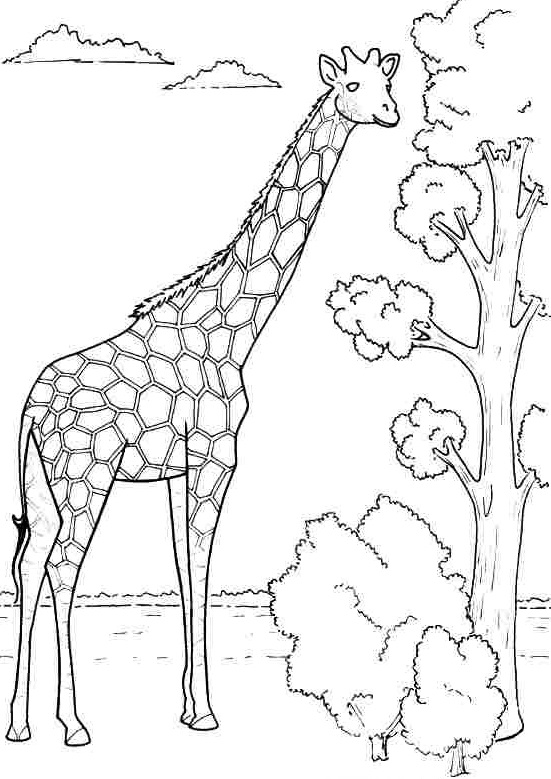 Kids giraffe coloring 3 Funnycrafts