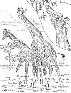 kids-giraffe-coloring-6