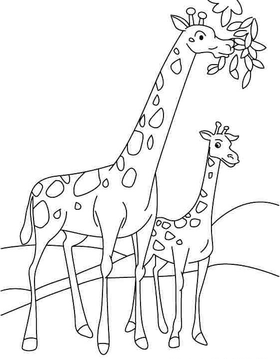 preschool giraffe coloring pages 1