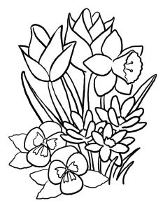 tulips-coloring-pages-1