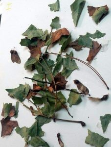 leaf-sensory-bin