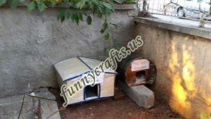 cardboard-cat-house-craft-ideas-6