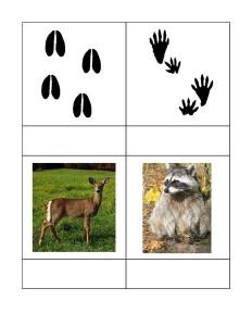 animals_tracks
