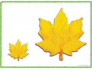 big_and_small_leaf