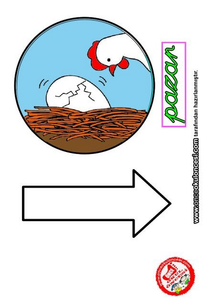 chicken_life_cycle_templates