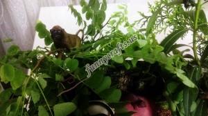 forest_sensory_bin