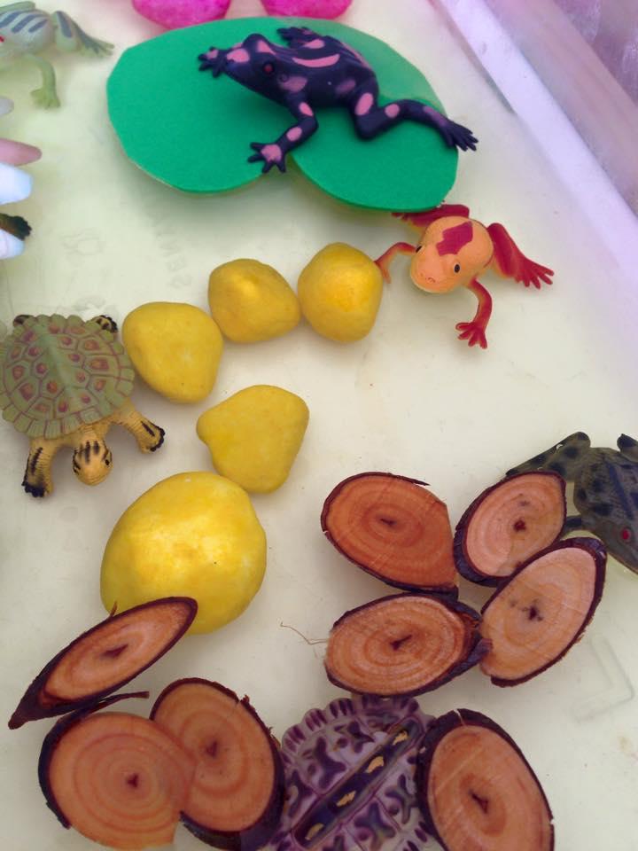 frog_sensory_table
