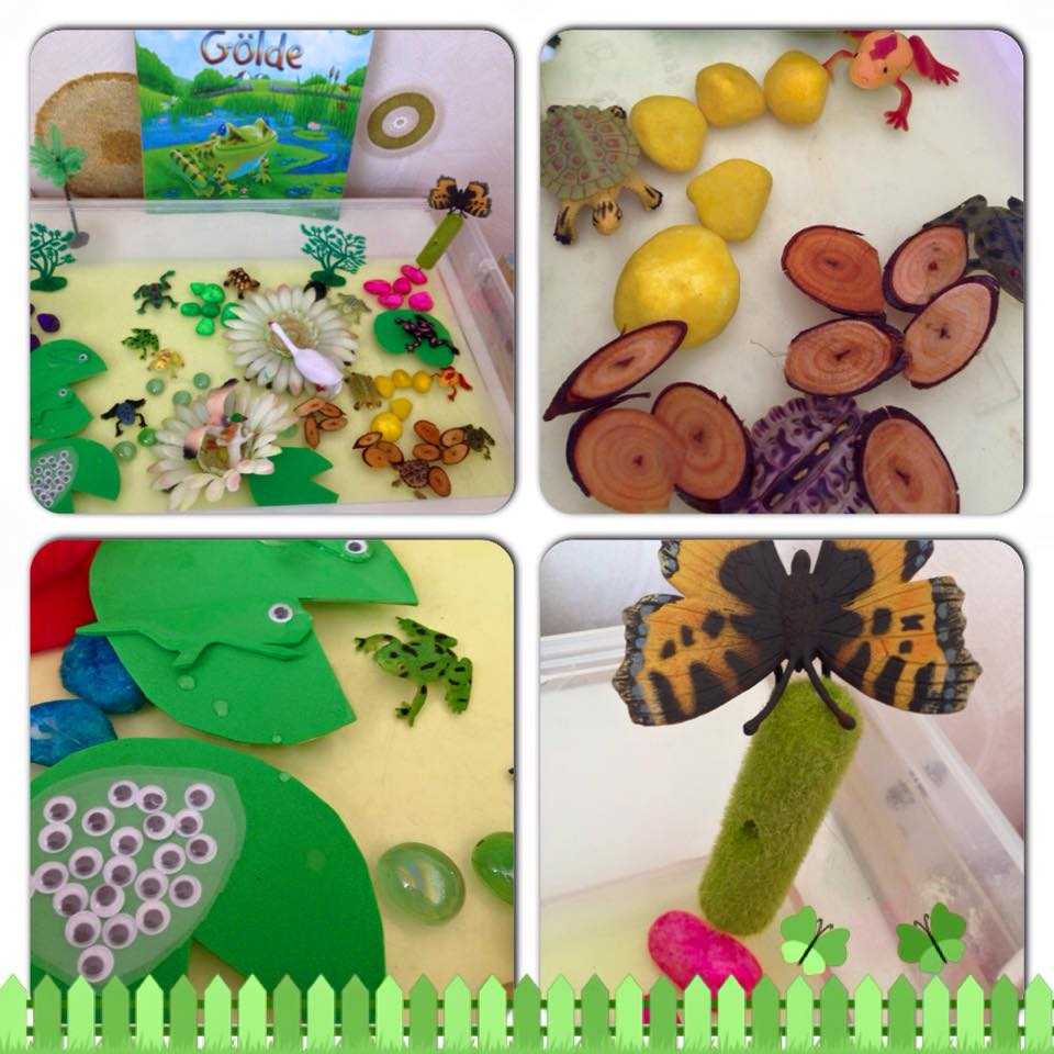 Photo of Frog Life Cycle Sensory Bin
