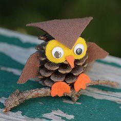 naturel_owl