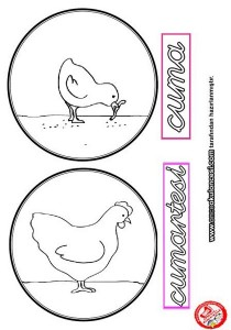 preschool_chicken_activities
