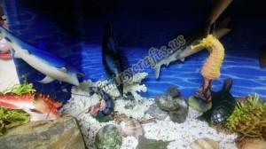 kindergarden_ocean_activities
