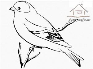 white_bird