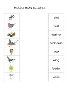 birds word matching