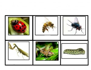 bugs activities cards