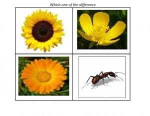 bugs activities flowers