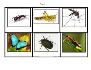bugs activities for preschoolers