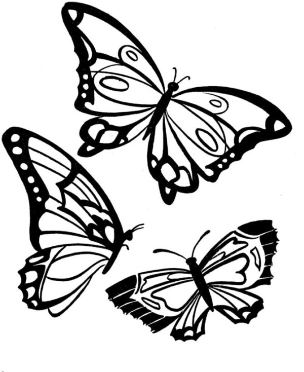 butterfly coloring f u0131ne motor  12   u00ab preschool and homeschool