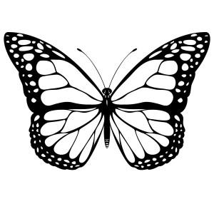 butterfly coloring fıne motor (6)