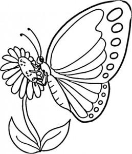 butterfly coloring fıne motor (9)