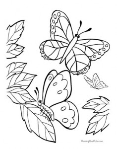 butterfly coloring naturel