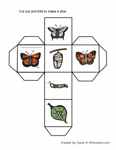 butterfly make a dice