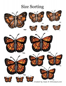 butterfly size activity