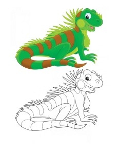coloring pages iguana