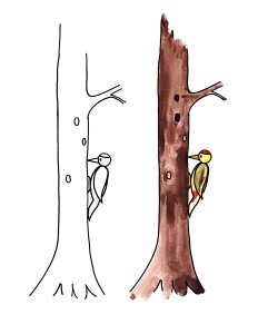 coloring pages woodpecker