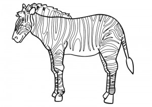 crocodile zebra