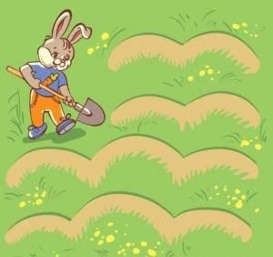 rabbit animals labyrinth
