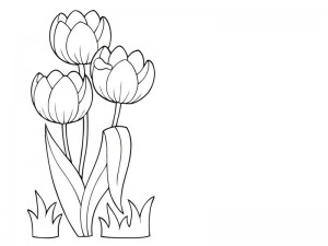 spring coloring page tulip