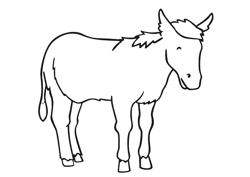 zoo coloring pages dankey