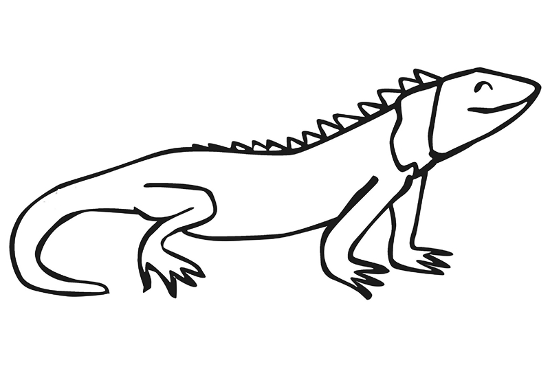zoo coloring pages iguana