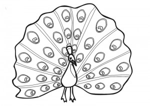 zoo coloring pages peacock