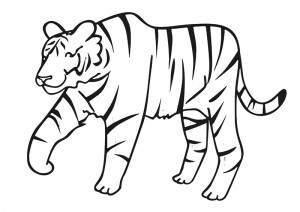 zoo coloring pages tiger