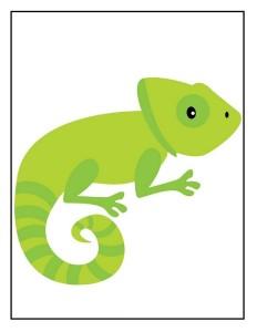 zoo iguana
