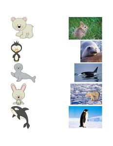 arctic animals match