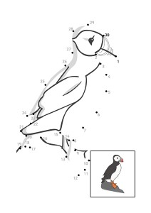 bird dot to dot activities