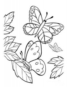 butterfly coloring pages (28)