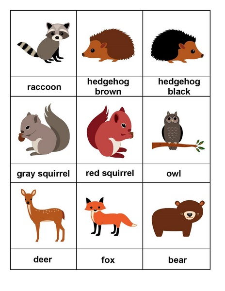Forest Animals Montessori Preschool Homeschool