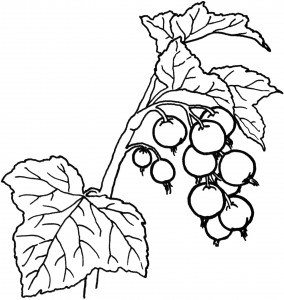 fruit coloring pages for kıds (12)