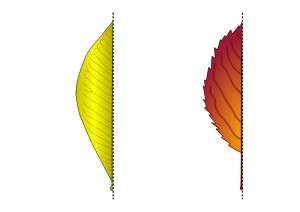 leaf symmetry activities