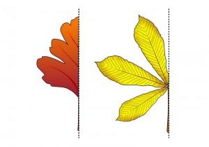 leaf symmetry activitty
