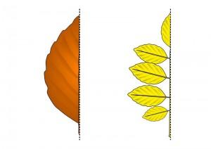 leaf symmetry activity