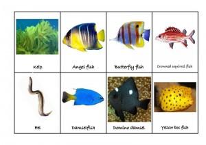 ocean animals matching